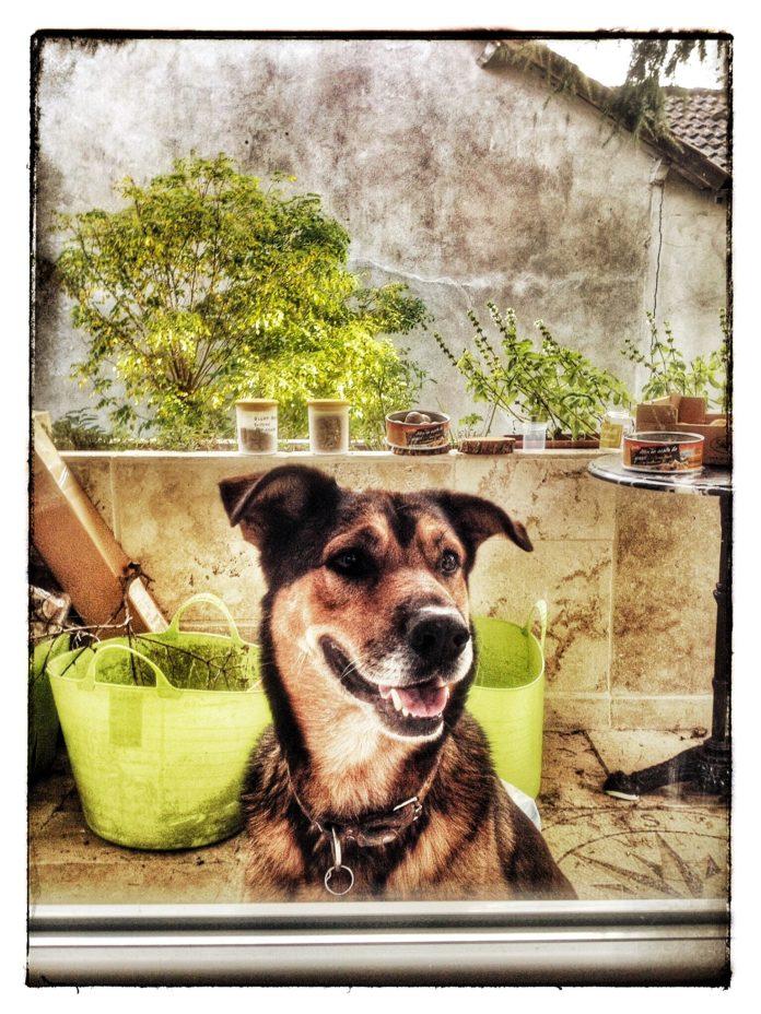 Le chien Athos