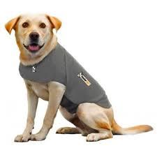 Vêtements pour chien Thundershirt - Achat / Vente Vêtements pour ...