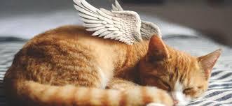 Accompagner la fin de vie avec Anima Care - Le Point Vétérinaire.fr